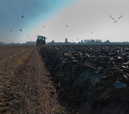 Close-up of plowed land in the Netherlands, the farmer with the plow and the tractor is in the background and the birds are looking for food. It's still early in the morning. photo