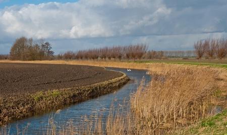 polder: Typical Dutch polder landscape in fall.