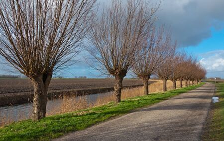 Typical Dutch polder landscape with a row of willows in autumn. photo