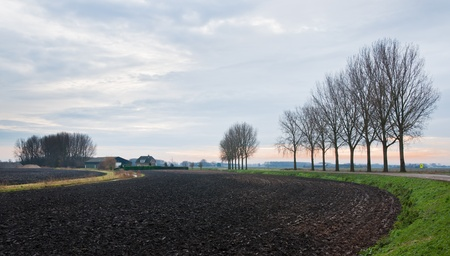 A rural area with a plowed field and a row of bare trees in the Netherlands (province of North Brabant) at the beginning of winter. photo