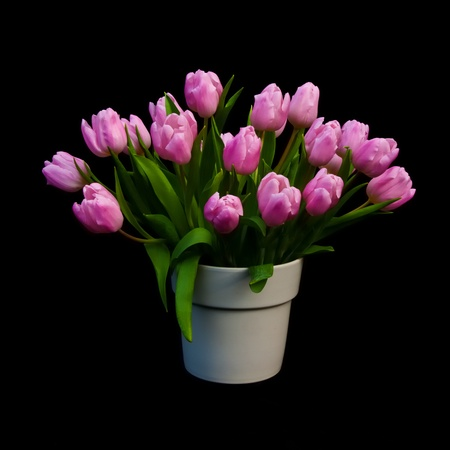 Bouquet of pink tulips in a vase against a black background