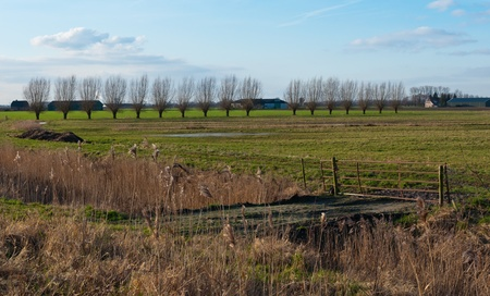 Landscape in the Netherlands with a row of pollard willows, an old and rusty fence, reed and  puddles on the field. Stock Photo - 12010963