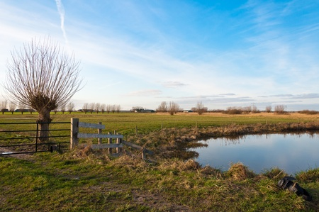 pollard willows: Landscape in the Netherlands with pollard willows and a reflecting water surface. Stock Photo