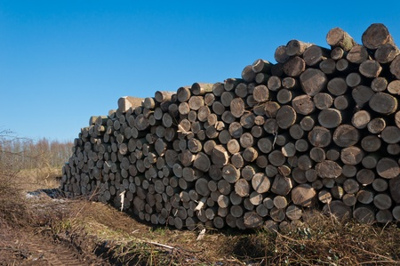 Stacked tree trunks in the Dutch field waiting for transport. Its sunny weather on this winter day. photo