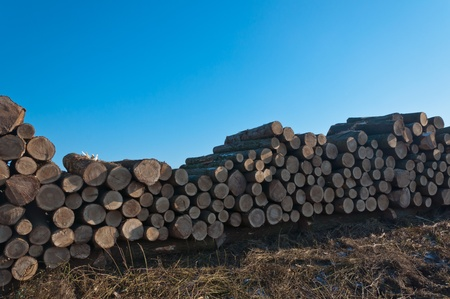 Stacked tree trunks in the Dutch field waiting for transport. Its sunny weather on this winter day with some snow. photo