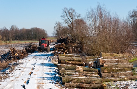 Harvesting trees in wintertime. Large trees are cut down. The logs are stacked. It is winter and there is some snow. Stockfoto