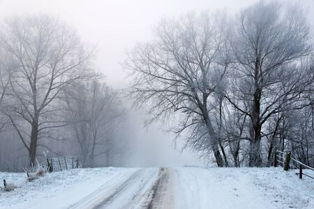 A snowy road up between the trees. It is very early in the morning and it freezes very much in the Netherlands. The morning mist still hangs over the landscape. The view is very limited and less colorful. Stock Photo - 12307227