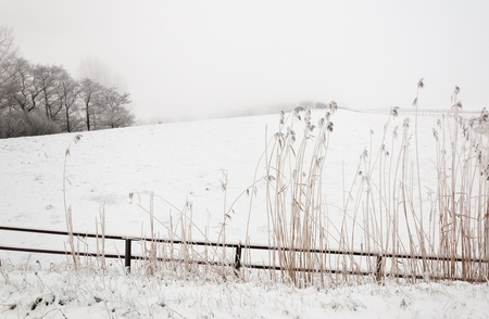 rushes: Snowy winter landscape with a fence and rushes in the foreground. It is very early in the morning and it freezes very much in the Netherlands. The morning mist still hangs over the landscape. The view is very limited and less colorful.
