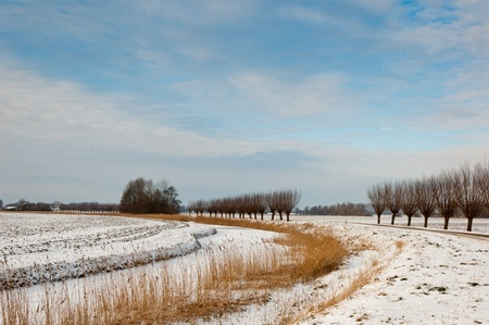 Winter landscape in the Netherlands with snow, rows pollard willows and a curved ditch with rushes. It is still early in the morning. photo
