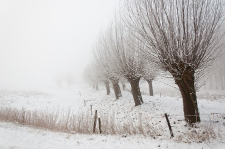 A snowy landscape. It is very early in the morning and it freezes very much in the Netherlands. The morning mist still hangs over the landscape. The view is limited and less colorful. photo