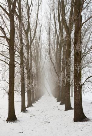 Een besneeuwde pad tussen de bomen. Het is heel vroeg in de ochtend en het vriest heel erg in Nederland. De ochtend mist hangt nog steeds over het landschap. Het uitzicht is beperkt en minder kleurrijk.