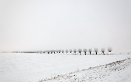 Row of pollard willows. It is very early in the morning and it freezes very much in the Netherlands. The morning mist still hangs over the landscape. The view is limited and less colorful.