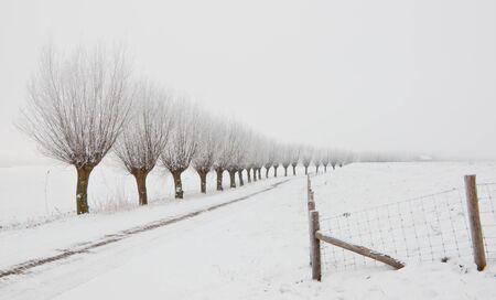 Row of pollard willows. It is very early in the morning and it freezes very much in the Netherlands. The morning mist still hangs over the landscape. The view is limited and less colorful. Stock Photo - 12307232