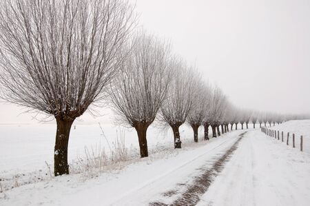 Row of pollard willows. It is very early in the morning and it freezes very much in the Netherlands. The morning mist still hangs over the landscape. The view is limited and less colorful. Stock Photo - 12307212