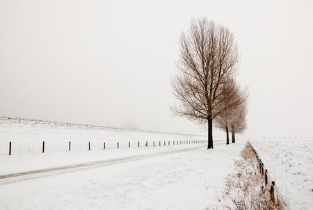 Reihe von großen und kahlen Bäumen. Es ist sehr früh am Morgen und es friert sehr stark in den Niederlanden. Der Morgennebel hängt noch über der Landschaft. Die Sicht ist eingeschränkt und weniger bunt.