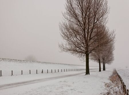 Row of large and bare trees. It is very early in the morning and it freezes very much in the Netherlands. The morning mist still hangs over the landscape. The view is limited and less colorful. photo