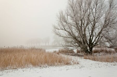 Dutch winter landscape in morning mist. It is very early in the morning and it freezes very much in the Netherlands. The morning mist still hangs over the landscape. The view is limited and less colorful. Stock Photo - 12307211