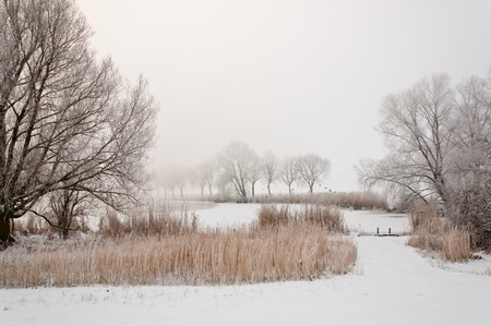 Dutch winter landscape in morning mist. It is very early in the morning and it freezes very much in the Netherlands. The morning mist still hangs over the landscape. The view is limited and less colorful. Stock Photo - 12307210