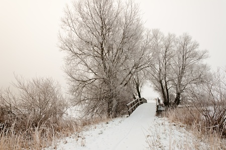 Trees and a small wooden bridge. It is very early in the morning and it freezes very much in the Netherlands. The morning mist still hangs over the landscape. The view is limited and less colorful. Stock Photo - 12307215