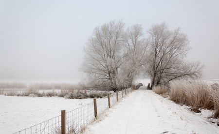 Trees, a fence and a small wooden bridge. It is very early in the morning and it freezes very much in the Netherlands. The morning mist still hangs over the landscape. The view is limited and less colorful. photo
