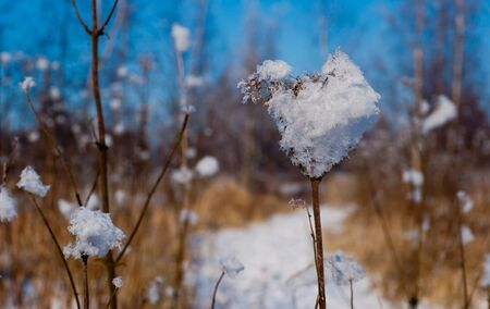 Closeup of a frosted flower with ice crystals against a blurred natural background. photo