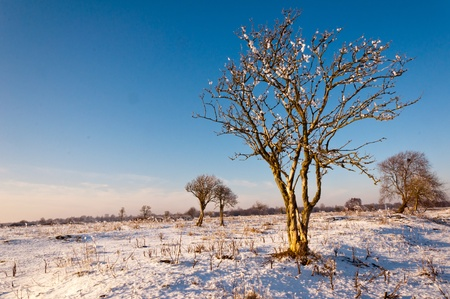 Solitary trees in a wide Dutch natural landscape  photo