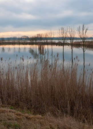 Dutch National Park De Biesbosch in the end of the winter season. Stock Photo - 12680839