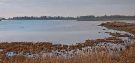 Dutch National Park De Biesbosch in the end of the winter season. photo
