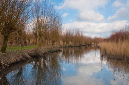 pollard willows: Pollard willows along a reflective creek. Dutch National Park De Biesbosch at the end of the winter season.