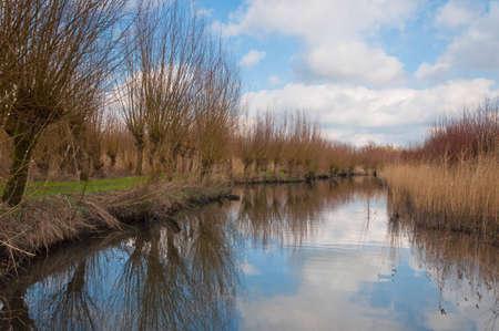 Pollard willows along a reflective creek. Dutch National Park De Biesbosch at the end of the winter season. Stock Photo - 12680841