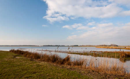 Dutch National Park De Biesbosch in winter colors. Stock Photo - 12680854