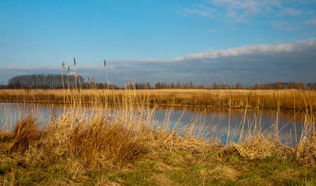 A creek with yellow reeds at the banks in the Dutch National Park De Biesbosch. The winter season is nearly over and springtime is coming. photo