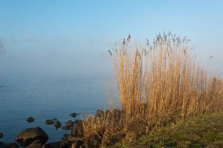 Waving reeds in the sunshine on the waterfront of the river.  The day has just begun and the morning mist is still above the water. Stock Photo - 12889351
