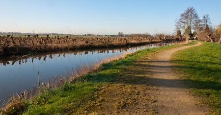 pollard willows: Sunny Dutch landcape with pollard willows, a smooth surface of a small river and a curved path.
