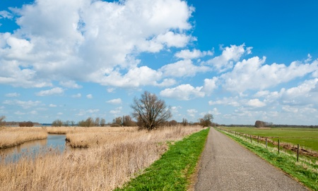 Narrow country road in the Netherlands along wetlands with yellow reeds and a fenced meadow Stock Photo - 12889392