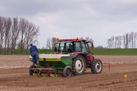 Machine planting of potatoes in North Brabant, Netherlands. Stock Photo