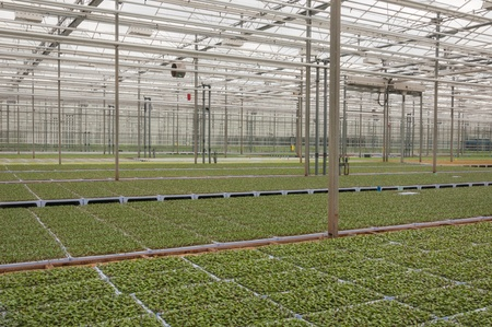 nurseries: Come in the greenhouse!, A public event in the greenhouse area of the Dutch village of Made where the flowers and plant nurseries are partially heated by waste heat from the Essent power plant in the nearby village of Geertruidenberg.