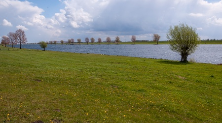 Dutch river Bergsche Maas in springtime with yellow flowering dandelions in the grass. photo