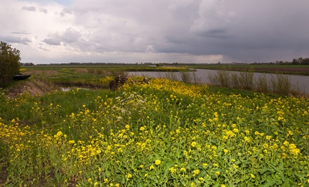 queen anne   s lace: Landscape in springtime with a curved river and flowering Field Mustard  Sinapis arvensis  and Wild Chervil  Anthriscus Sylvestris