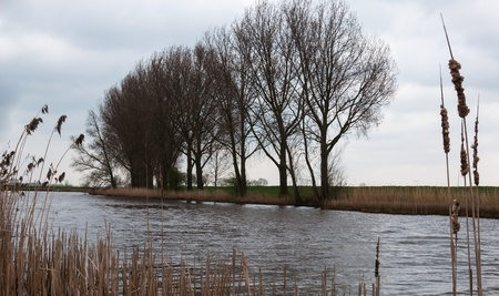 A creek with bare trees, reeds and rushes on the banks  photo