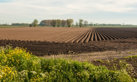 Rows of soil after planting potatoes in the Netherlands  It is springtime  Stock Photo - 13389363