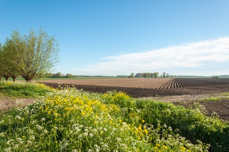 Colorful field edges and rows of soil after planting potatoes in the Netherlands Stock Photo - 13389361
