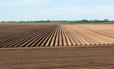 Rows of soil after planting potatoes in the Netherlands  It is springtime  Stock Photo - 13389300
