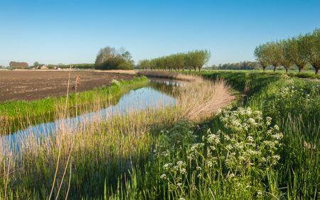 queen anne   s lace: Colorful landscape with a curved ditch, vegetated edges and rows of pollard willows  Stock Photo