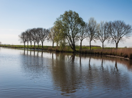 Trees in a row at the side of a natural pond in the Netherlands. Stock Photo - 13389794