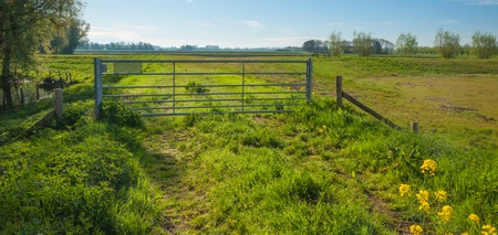 Rural landscape in spring with a steel fence on the upper side of a dike in the Netherlands. photo