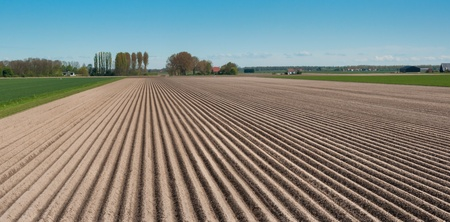 Rows of soil after planting potatoes in the Netherlands. It is springtime. Standard-Bild