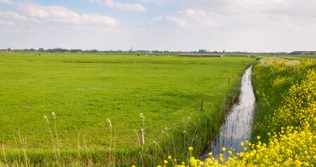 Dutch rural landscape with a meadow and a reflecting ditch  photo