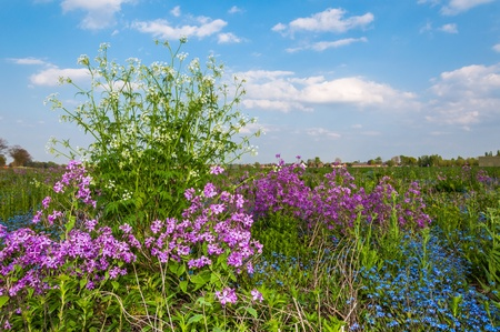 subdivided: Flowering wild plants in a Dutch field edge.