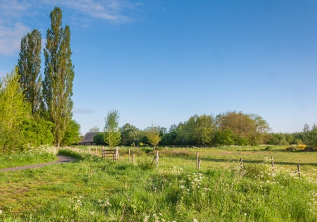 Varied Dutch landscape with high elms, a curved path and fields with a fence. photo